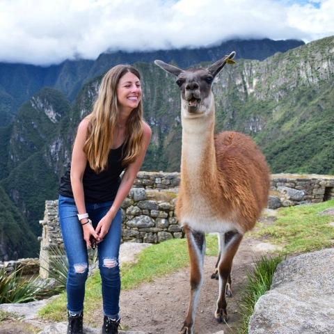 llama - Machu Picchu - Inside the Salkantay Trek to Machu Picchu - www.afternoonstroll.com