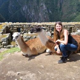 llamas - Machu Picchu - Inside the Salkantay Trek to Machu Picchu - www.afternoonstroll.com