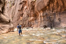 Exploring Zion | afternoonstroll.com